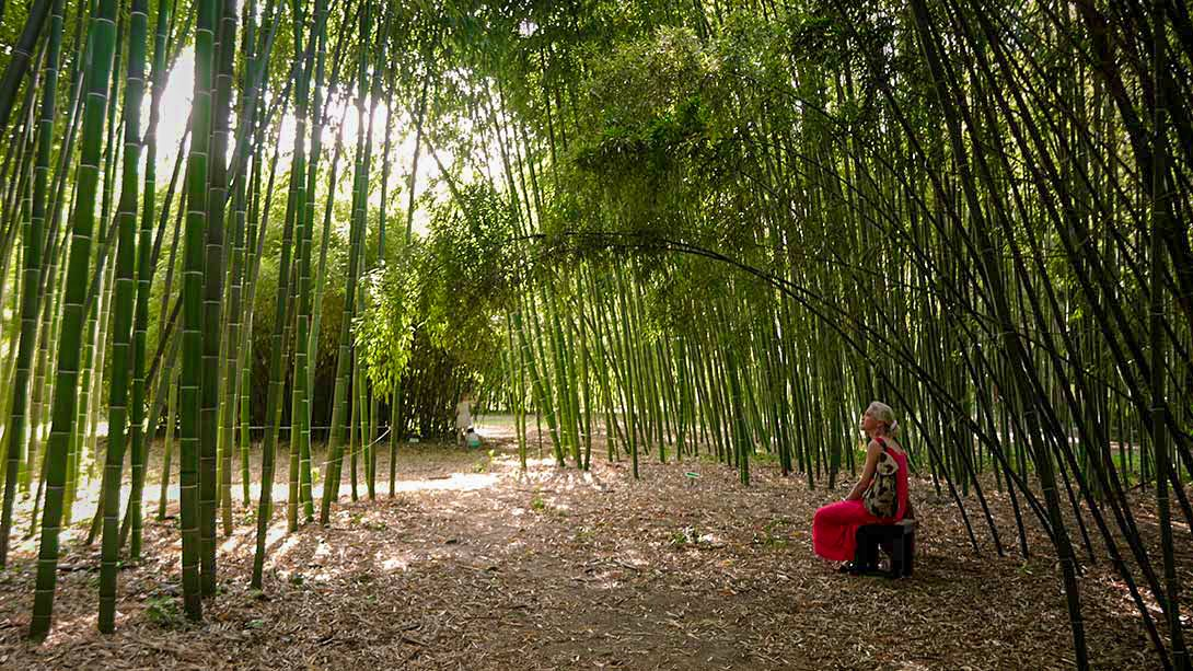 Delphine-in-bamboo-2